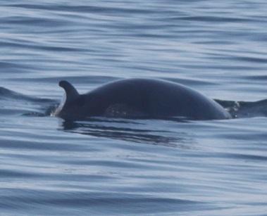 Whale in Lisbon